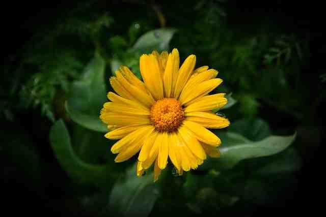 Comment aménager un parterre de fleurs?