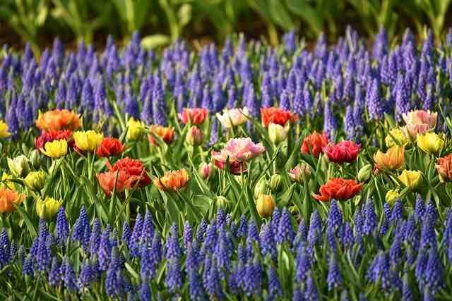 Comment créer un jardin fleuri?