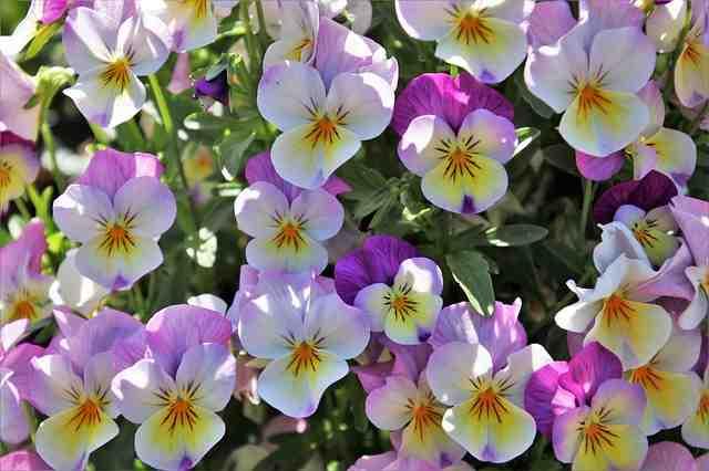 Comment faire un jardin fleuri sans entretien?